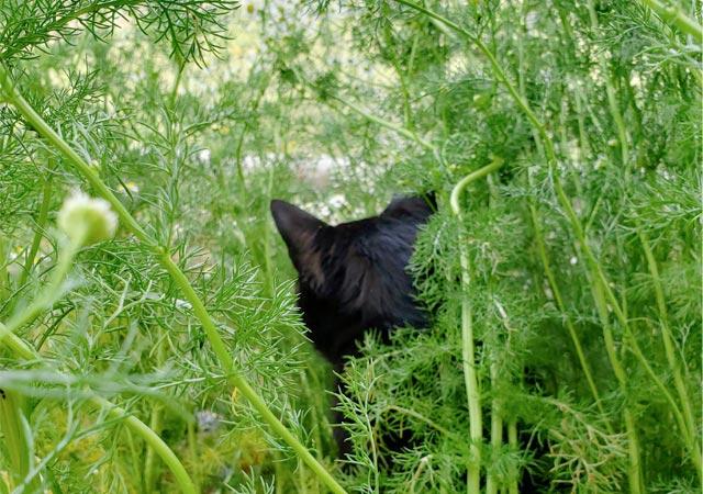 黒猫ちぃすけとカモミール